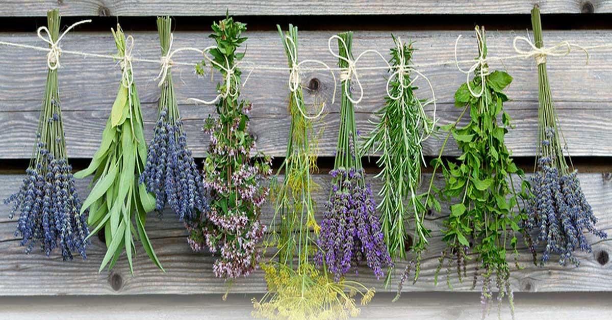 Fitoterapia - plantas medicinais